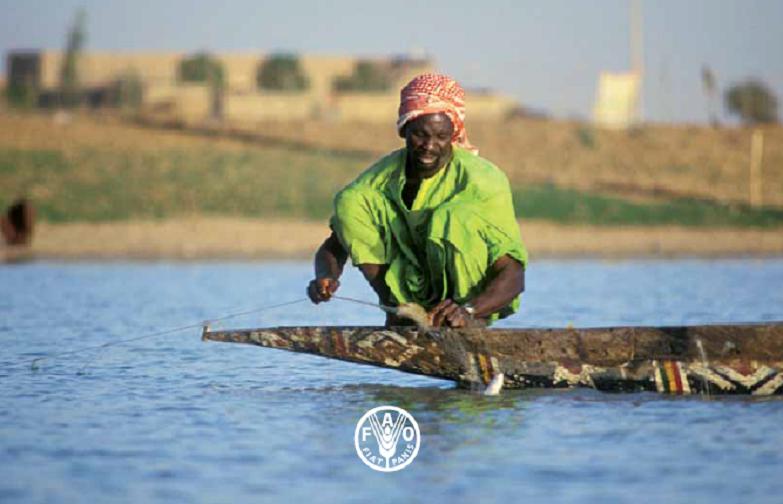 FAO imagen