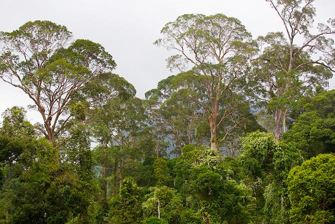 Bosques Cifor3