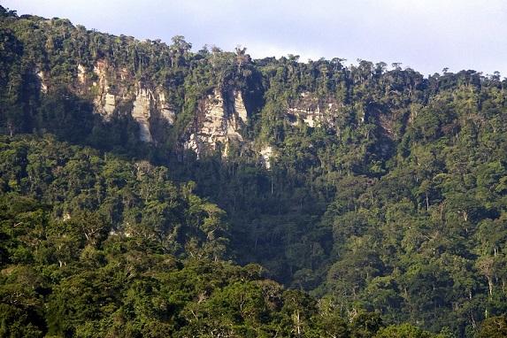 bosques mar1